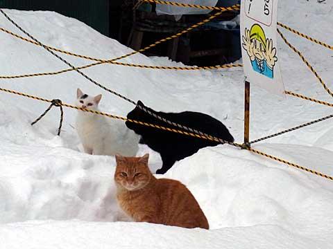 2012年1月1日ボート乗場の猫たち