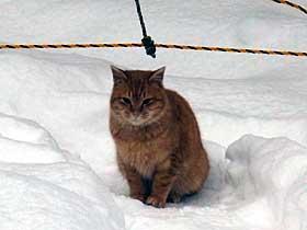 2012年1月1日猫