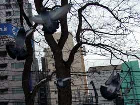 2012年1月1日九条広場の鳩