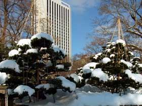 2012年1月9日木々の雪吊り